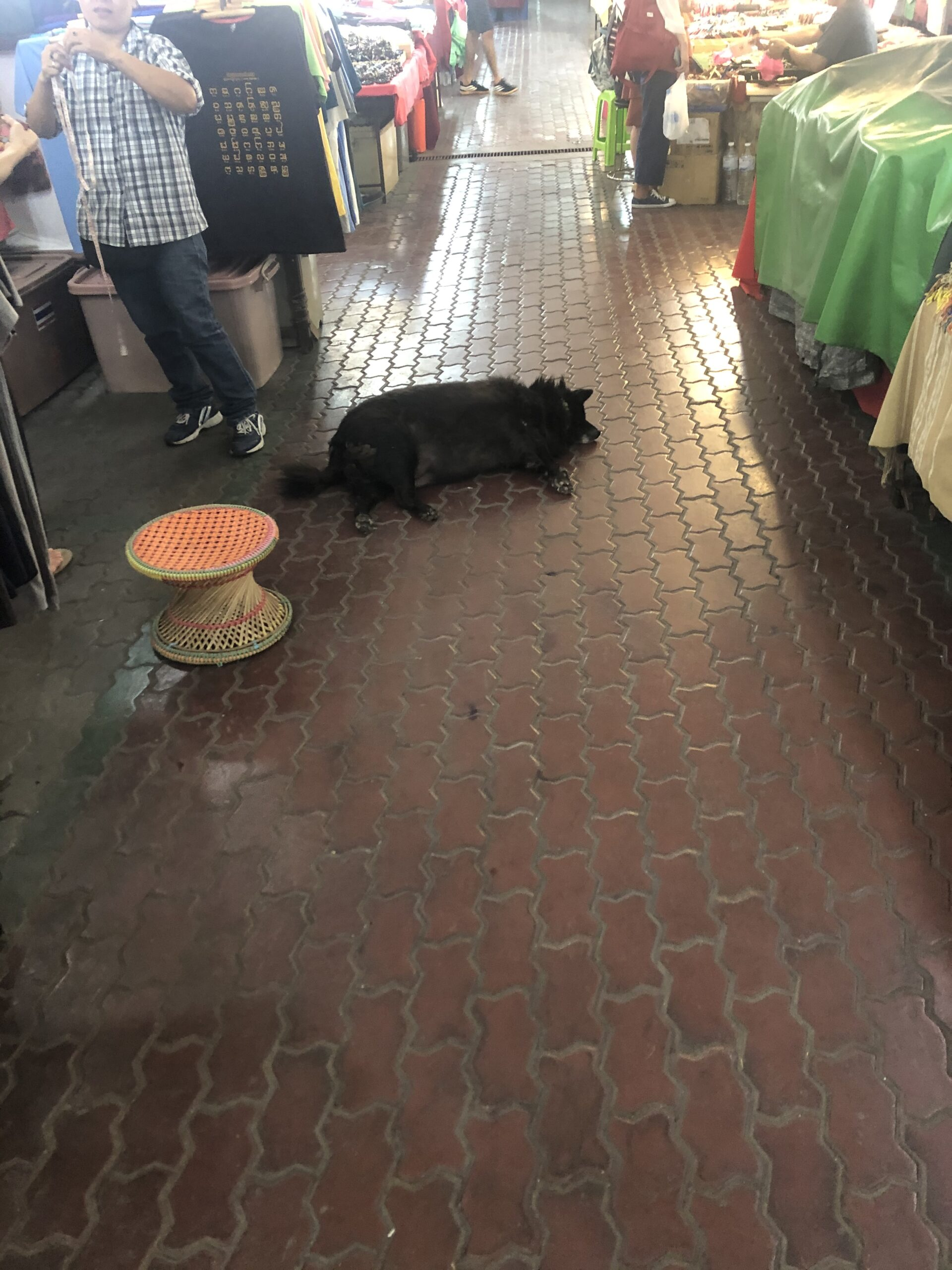 Picture of a dog laying down at Chiang Mai Night Bazaar